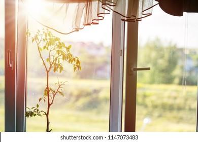 Sunlight through the window illuminates the bedroom.