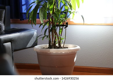 sunlight through window on plant