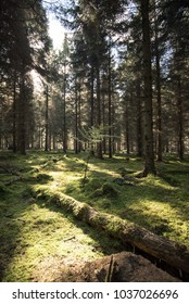 Sunlight through woodland with moss and fallen branches - Woodland Oxfordshire - UK