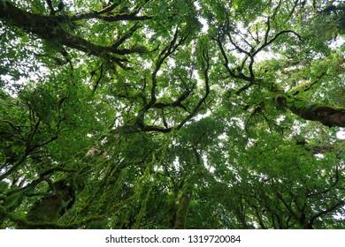 sunlight throught green moss on nature tree of greenery rainforest jungle