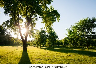 Sunlight and trees of parks on sunny days. Forest landscape in summer.