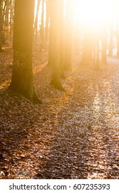sunlit autumn path in park leading to the city