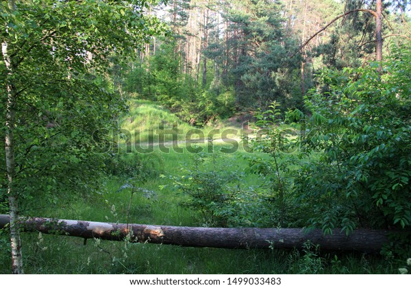 Sunlit Beautiful Forest Landscape Fallen Tree Stock Photo