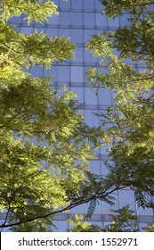 Sunlit branches in foreground with office building beyond