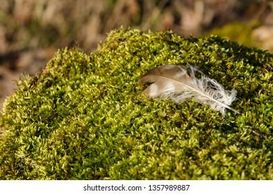 Sunlit brown bird feather on a green mossy ground