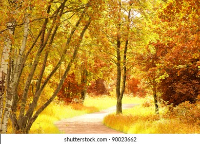 Sunlit Foliage Natural Background