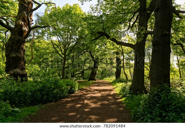 A sunlit footpath winds between the tall trees of Sherwood Forest