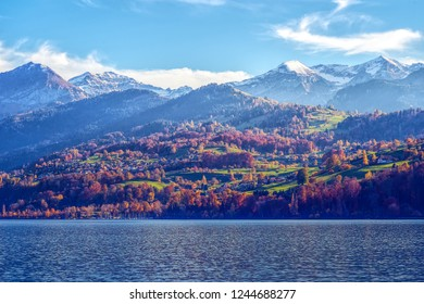 Sunlit forest at Lake Thun