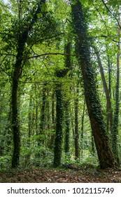 Sunlit German woods in summer.