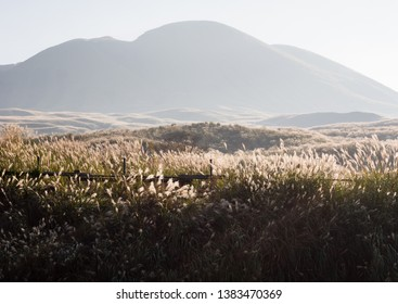 Sunlit grass on the meadows in Aso volcanic caldera - Aso-Kuju National Park, Kumamoto Prefecture, Japan