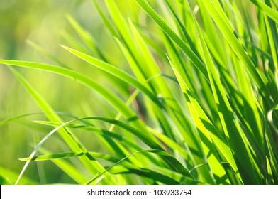 Sunlit Green Summer Grass