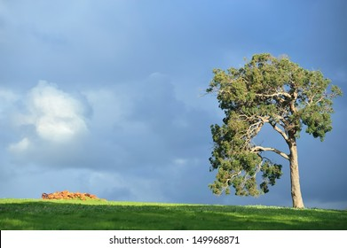 sunlit gum tree and rock pile under stormy sky