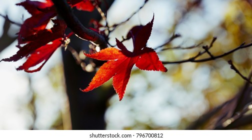 Sunlit Maple leaf against a beautiful fall sky