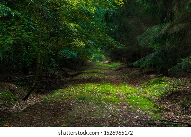 sunlit path in the dark forest