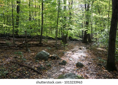 Sunlit path through a green shady forest. Peaceful nature scene