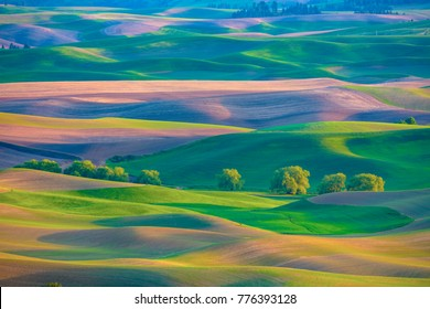 Sunlit rolling hills of farm land of Palouse region of Washington State America from Steptoe Butte in Spring