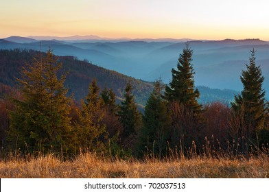 Sunlit spruce, pine trees against smoky mountain range covered in purple, blue grey mist under warm orange cloudless sky on a warm fall evening in October. Carpathians, Ukraine