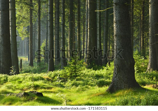 Sonnenbeleuchteter Laubwald