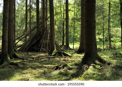 Sunlit spruce tree forest tent, horizontal