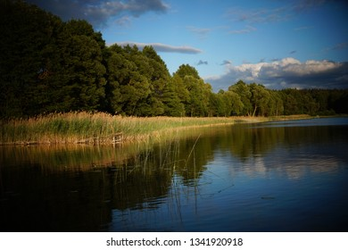 Sunlit sweet flag (or calamus) on a lake shore in Masuria, region in northern Poland.