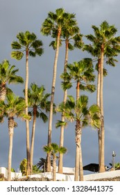 Sunlit tall palm trees against a grey stormy sky