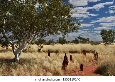Sunlit termite mounds in Australian desert with ghost gum and golden grasses