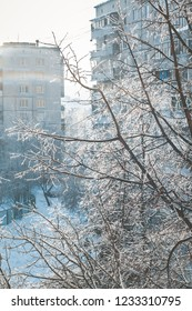 Sunlit tree branches covered with ice and white snow against buildings in winter town