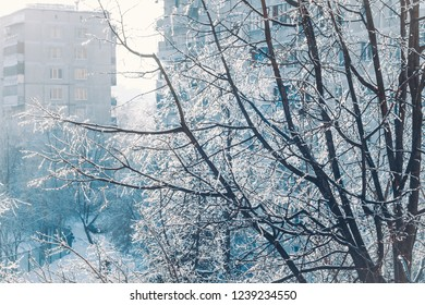 Sunlit tree branches covered with sparkling ice and white snow against buildings in winter town