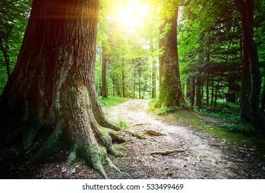 Sunlit Tree Forest