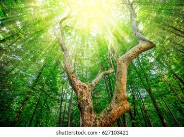 Sunlit tree forest.