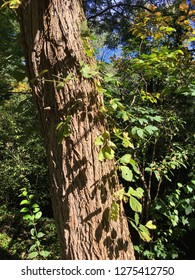 Sunlit tree trunk