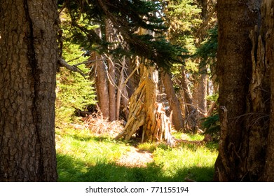 Sunlit trees in a forest