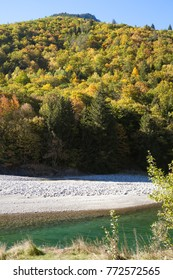 Sunlit whitewater of mountain river with yellow trees