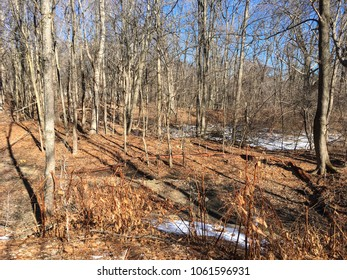 Sunlit wooded area