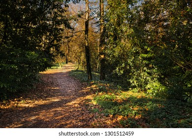 Sunlit woodland path