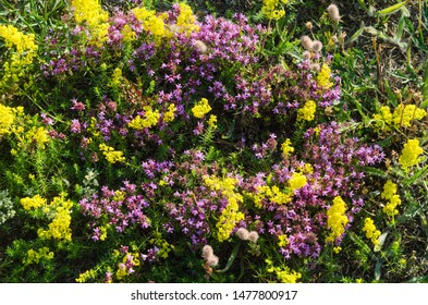 Sunlit yellow and purple summer flowers close up