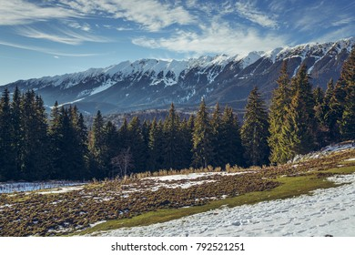 Sunny alpine winter landscape with fir trees forest, melting snow patches and snow-capped Piatra Craiului Mountains range seen from Zanoaga meadow, Romania.