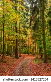 Sunny and amazing autumn in the forest, Europe