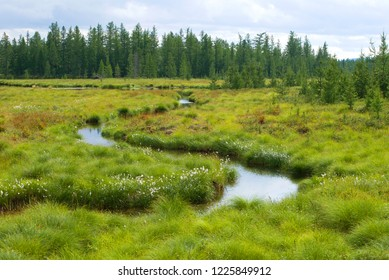 Sunny august day in the forest tundra. Yamal, Russia
