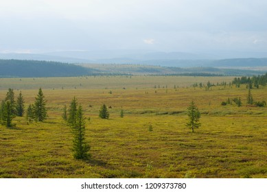 Sunny August day in the Yamal tundra. Polar region, Russia