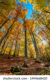 Sunny Autumn in colorful wild forest - tall yellow orange trees and blue sky, natural fall landscape
