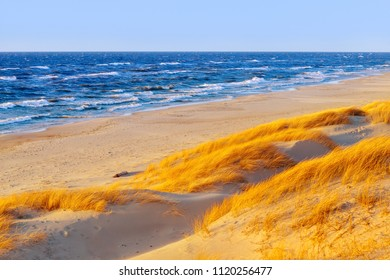 Sunny autumn day on the Baltic sea. Sandy beach, dunes and yellow grass