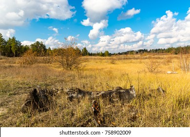 Sunny autumn day on meadow in forest