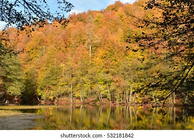 Sunny autumn day at Yedigoller National Park, Turkey