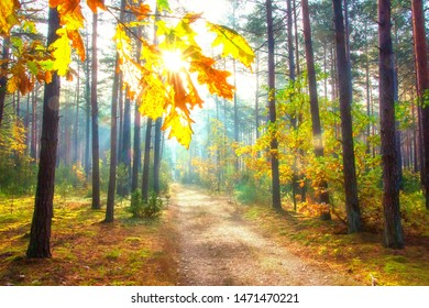 Sunny autumn forest. Amazing forest scene. October bright day in woodland. Scenic fall nature landscape. Sun in forest