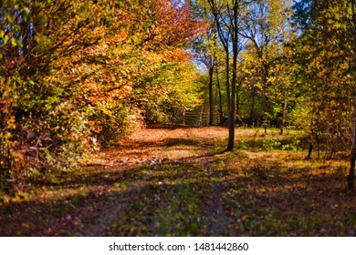 Sunny autumn landscape with golden trees and blue sky in a forest