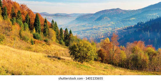 sunny autumn panorama of  countryside. fog in the distant valley. trees in fall foliage on the hillside. mountain range in the distance. bright weather with clouds on the sky
