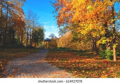 Sunny autumn scene.Path in the park.