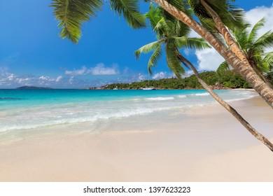 Sunny beach with coconut palms on tropical island.
