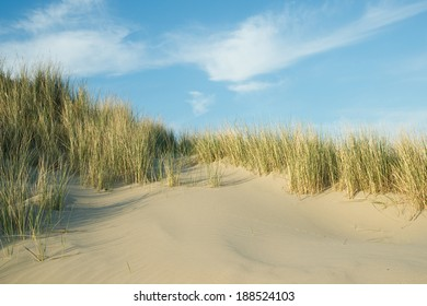 Sunny beach with sand dunes in Ouddorp, The Netherlands